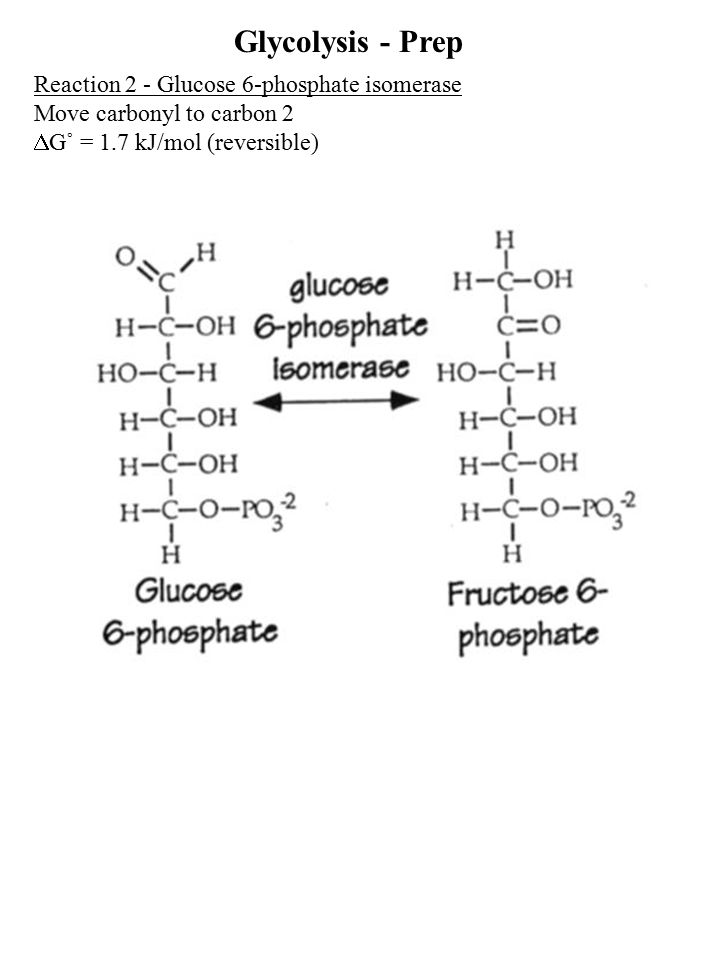 Reaction 2 - Glucose 6-phosphate isomerase Move carbonyl to carbon 2  G˚ = 1.7 kJ/mol (reversible) Glycolysis - Prep