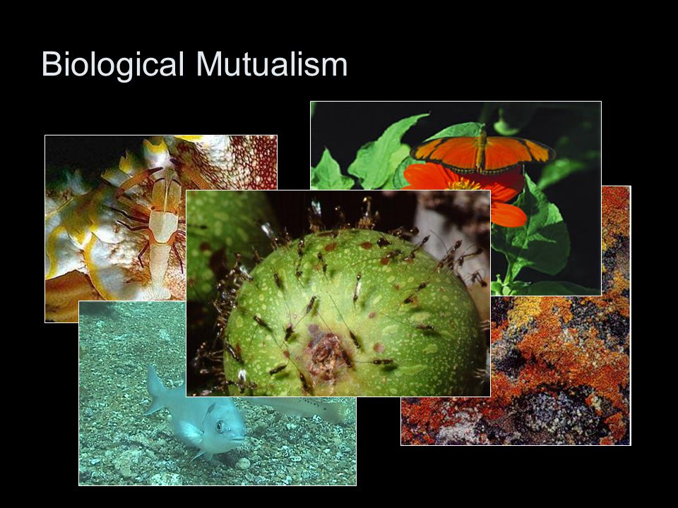 Biological Mutualism