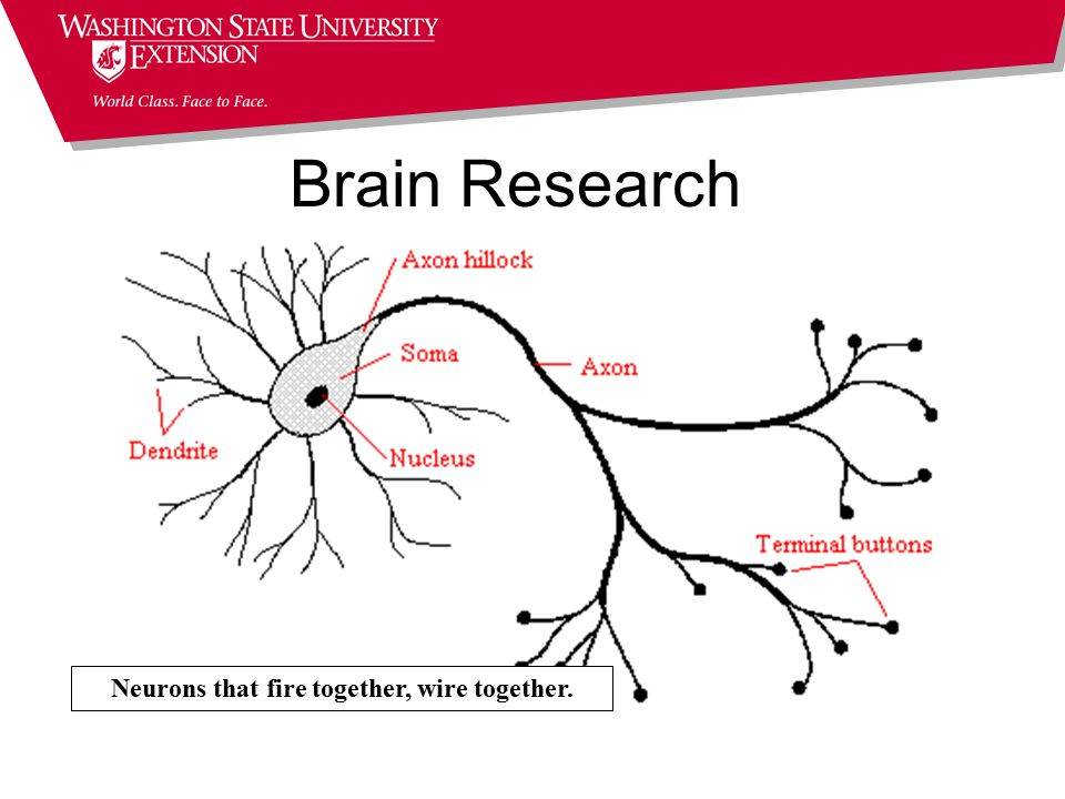 Brain Research Neurons that fire together, wire together.