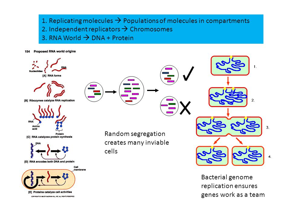 1. Replicating molecules  Populations of molecules in compartments 2.