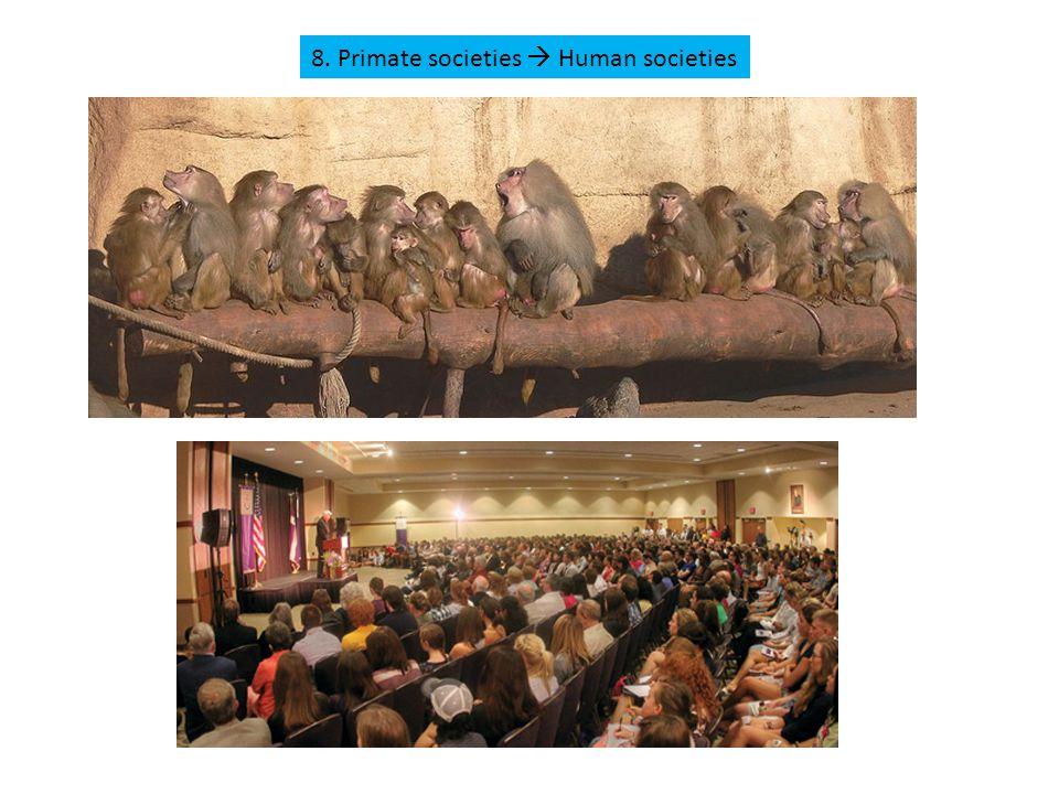8. Primate societies  Human societies