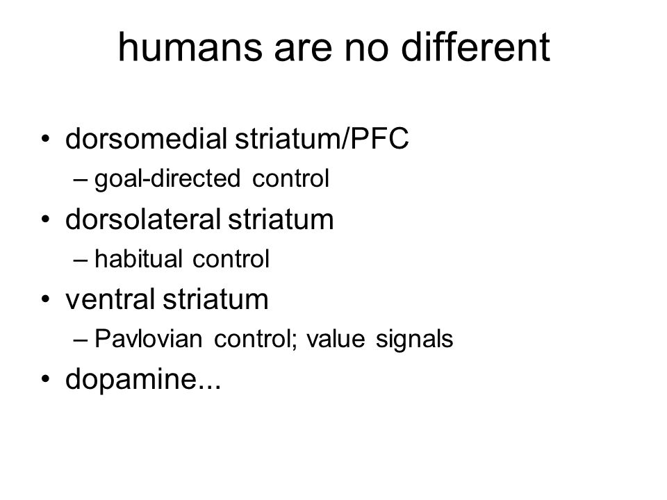 humans are no different dorsomedial striatum/PFC –goal-directed control dorsolateral striatum –habitual control ventral striatum –Pavlovian control; v