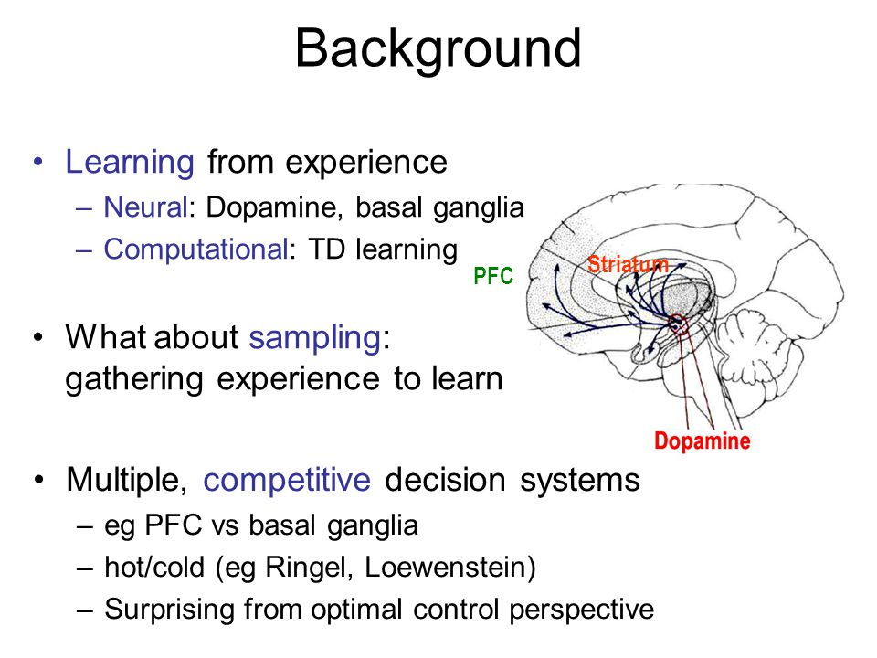 Background Learning from experience –Neural: Dopamine, basal ganglia –Computational: TD learning What about sampling: gathering experience to learn PF