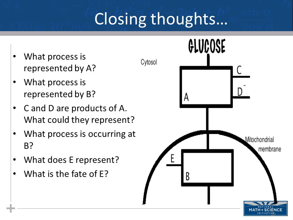Closing thoughts… What process is represented by A? What process is represented by B? C and D are products of A. What could they represent? What proce