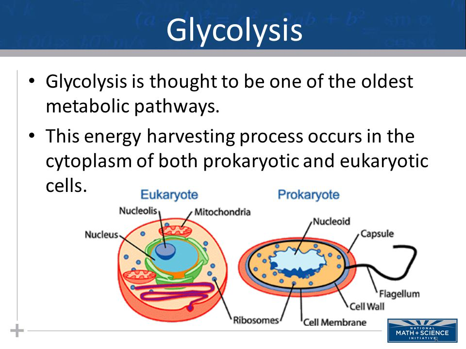 Glycolysis Glycolysis is thought to be one of the oldest metabolic pathways. This energy harvesting process occurs in the cytoplasm of both prokaryoti