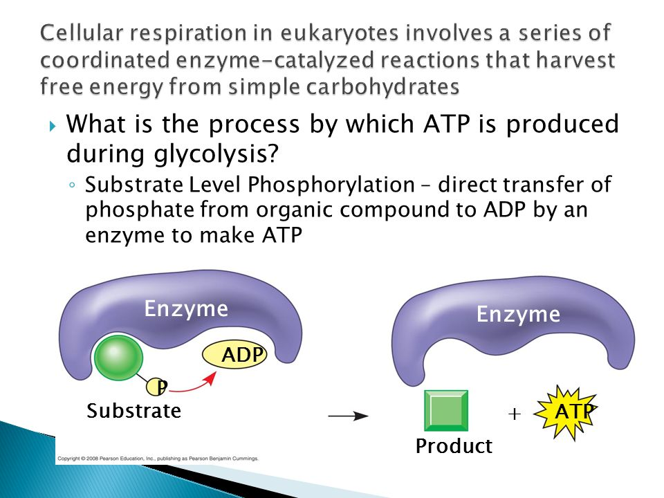  What is the process by which ATP is produced during glycolysis.