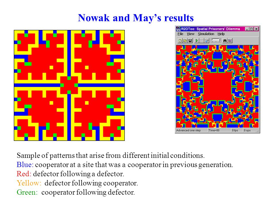 Nowak and May's results Sample of patterns that arise from different initial conditions.