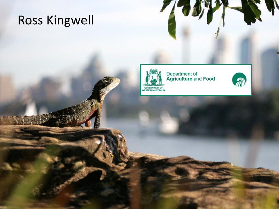 Ross Kingwell