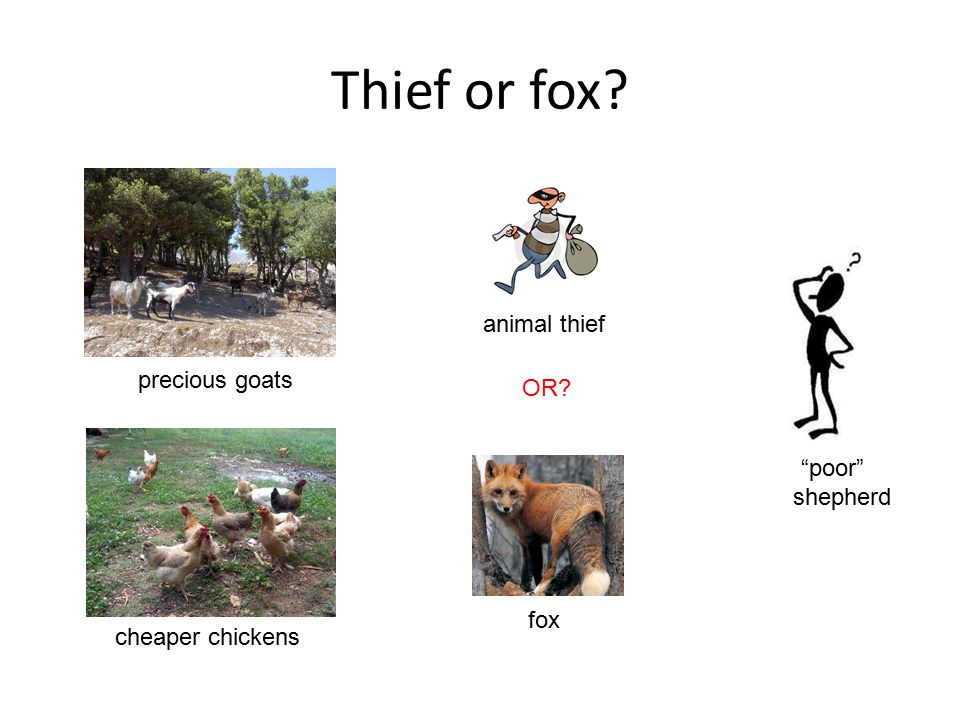 "Thief or fox? cheaper chickens precious goats animal thief fox ""poor"" shepherd OR?"