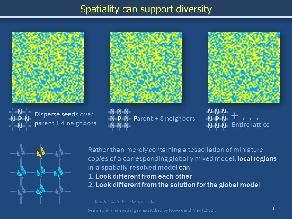 1 Spatiality can support diversity T = 0.5, R = 0.25, P = -0.25, S = -0.5 See also similar spatial games studied by Nowak and May (1992).