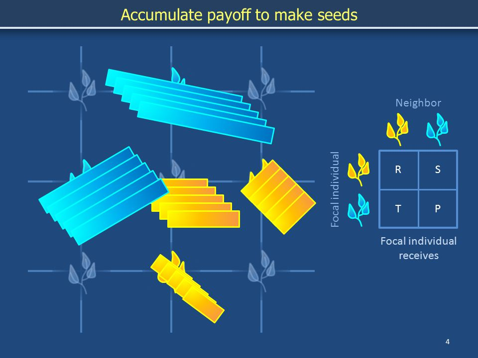 4 Accumulate payoff to make seeds RS TP Focal individual Neighbor Focal individual receives