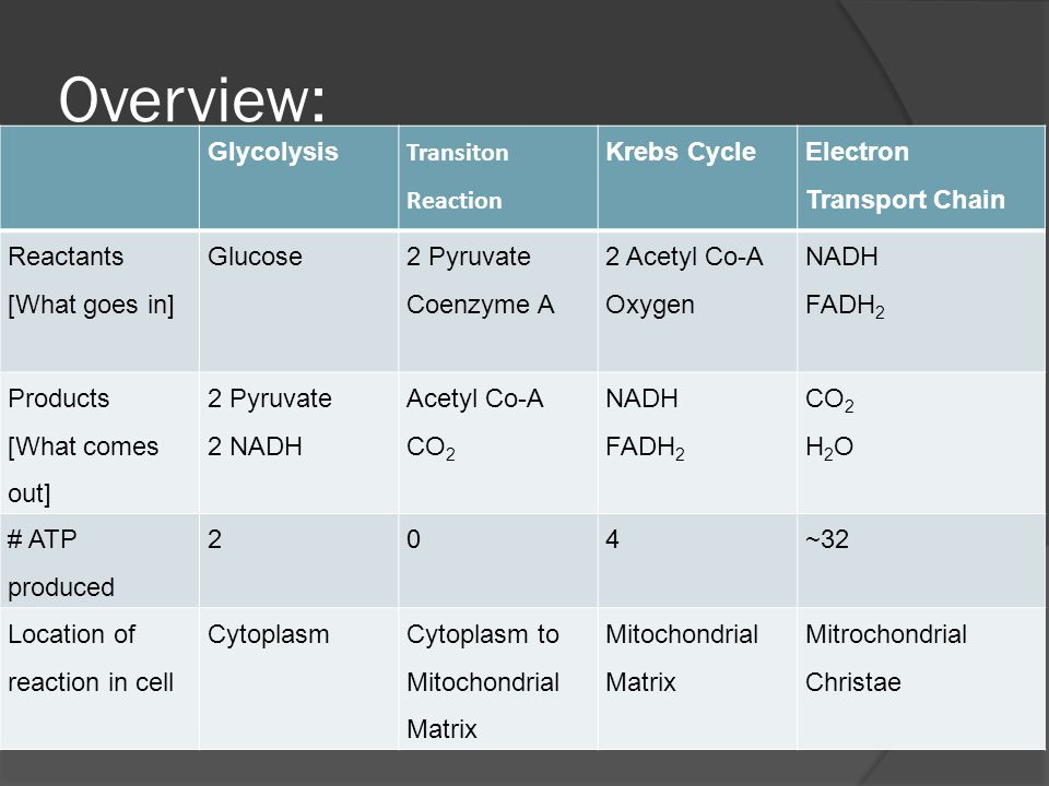 Overview: Glycolysis Transiton Reaction Krebs Cycle Electron Transport Chain Reactants [What goes in] Glucose2 Pyruvate Coenzyme A 2 Acetyl Co-A Oxygen NADH FADH 2 Products [What comes out] 2 Pyruvate 2 NADH Acetyl Co-A CO 2 NADH FADH 2 CO 2 H 2 O # ATP produced 204~32 Location of reaction in cell CytoplasmCytoplasm to Mitochondrial Matrix Mitochondrial Matrix Mitrochondrial Christae