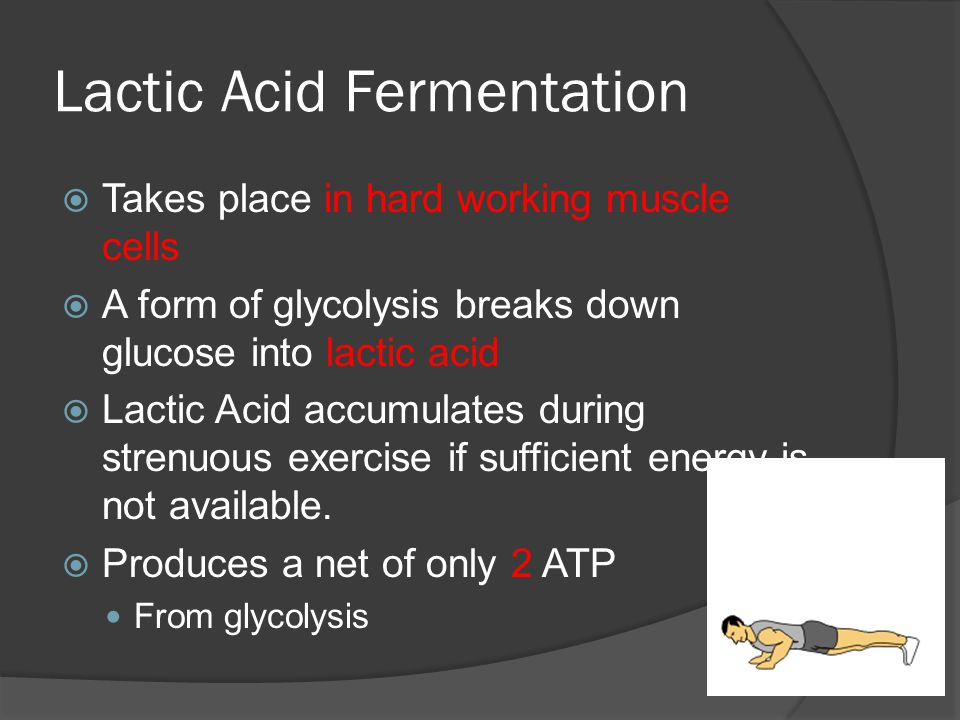 Lactic Acid Fermentation  Takes place in hard working muscle cells  A form of glycolysis breaks down glucose into lactic acid  Lactic Acid accumulates during strenuous exercise if sufficient energy is not available.