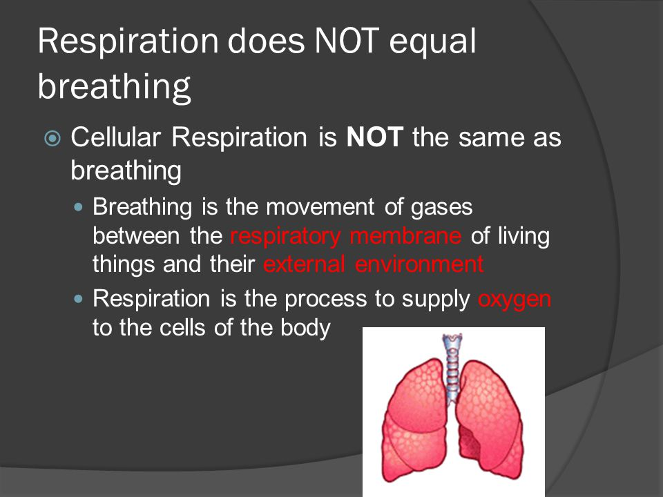 Respiration does NOT equal breathing  Cellular Respiration is NOT the same as breathing Breathing is the movement of gases between the respiratory membrane of living things and their external environment Respiration is the process to supply oxygen to the cells of the body