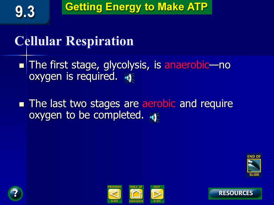 Cellular Respiration Respiration occurs in three metabolic stages: glycolysis, the Krebs cycle, and the electron transport chain and oxidative phosphorylation.