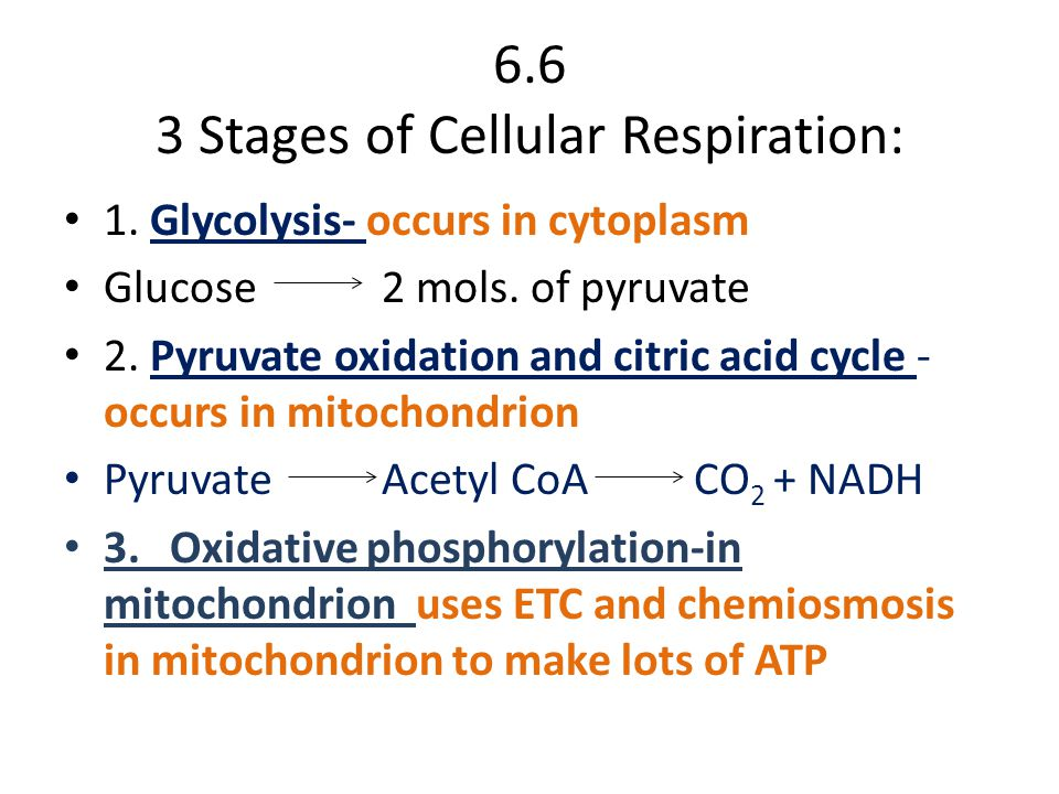 6.6 3 Stages of Cellular Respiration: 1. Glycolysis- occurs in cytoplasm Glucose 2 mols.