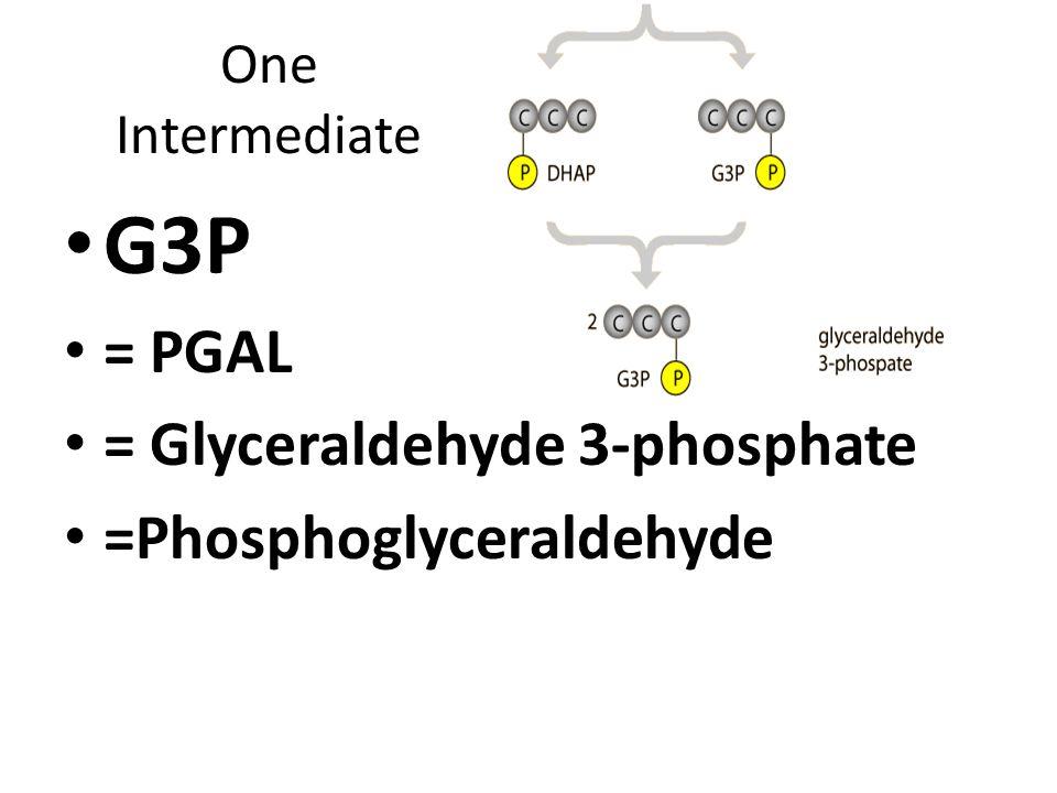 One Intermediate G3P = PGAL = Glyceraldehyde 3-phosphate =Phosphoglyceraldehyde
