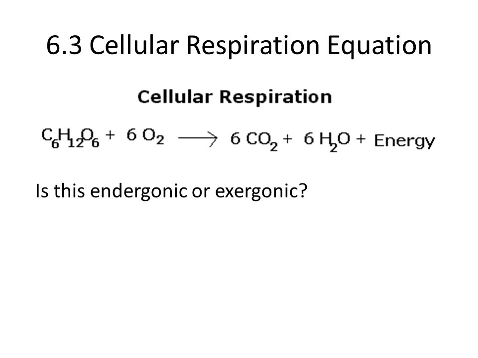 6.3 Cellular Respiration Equation Is this endergonic or exergonic?