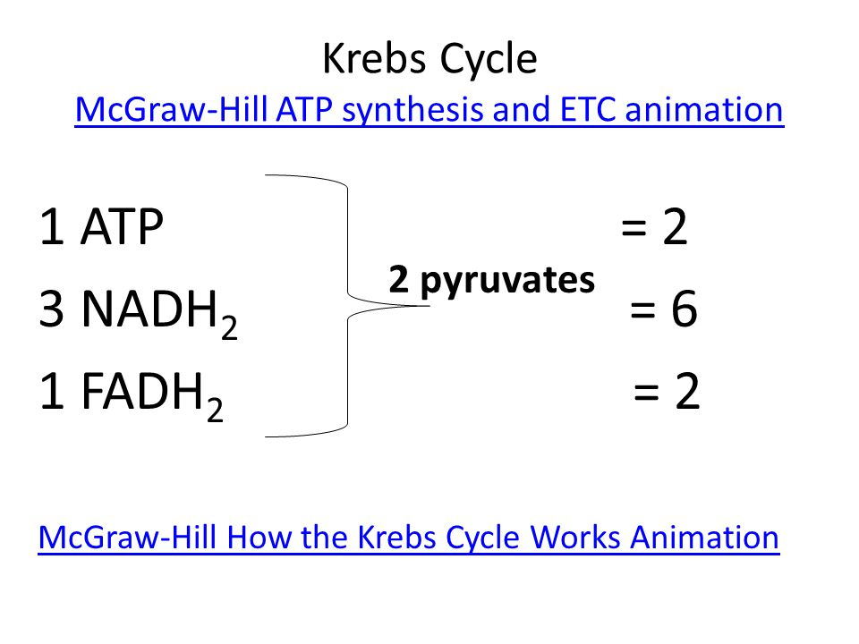 Krebs Cycle McGraw-Hill ATP synthesis and ETC animation McGraw-Hill ATP synthesis and ETC animation 1 ATP = 2 3 NADH 2 = 6 1 FADH 2 = 2 McGraw-Hill Ho