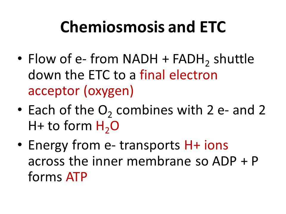 Chemiosmosis and ETC Flow of e- from NADH + FADH 2 shuttle down the ETC to a final electron acceptor (oxygen) Each of the O 2 combines with 2 e- and 2