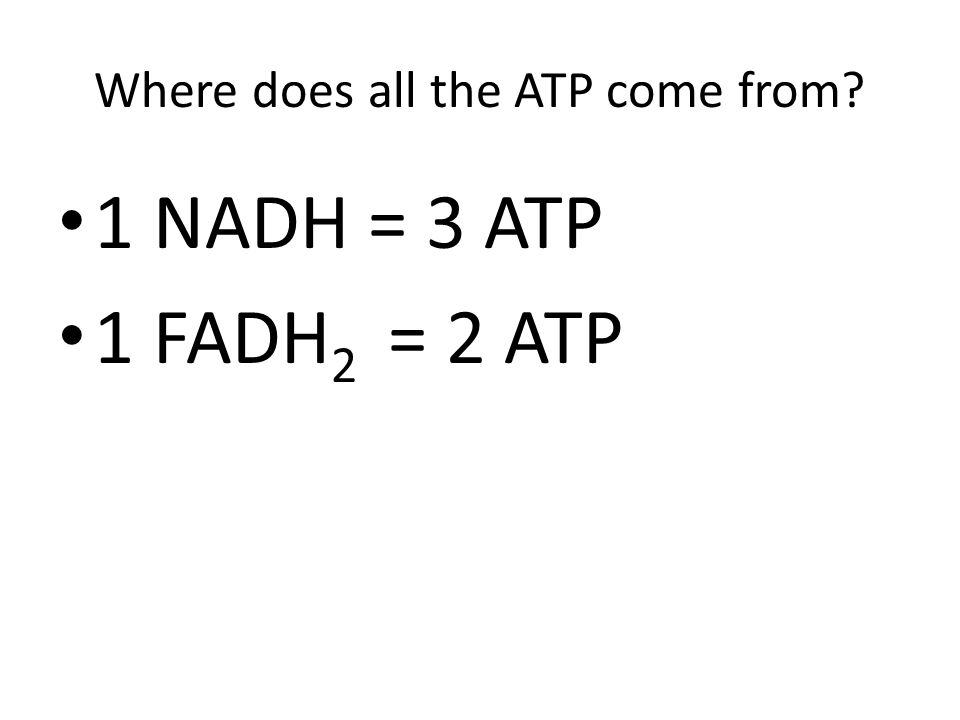 Where does all the ATP come from? 1 NADH = 3 ATP 1 FADH 2 = 2 ATP