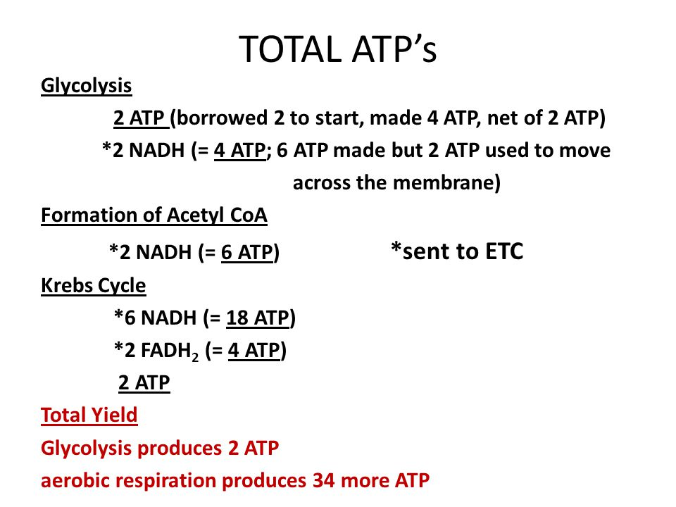 TOTAL ATP's Glycolysis 2 ATP (borrowed 2 to start, made 4 ATP, net of 2 ATP) *2 NADH (= 4 ATP; 6 ATP made but 2 ATP used to move across the membrane) Formation of Acetyl CoA *2 NADH (= 6 ATP) *sent to ETC Krebs Cycle *6 NADH (= 18 ATP) *2 FADH 2 (= 4 ATP) 2 ATP Total Yield Glycolysis produces 2 ATP aerobic respiration produces 34 more ATP