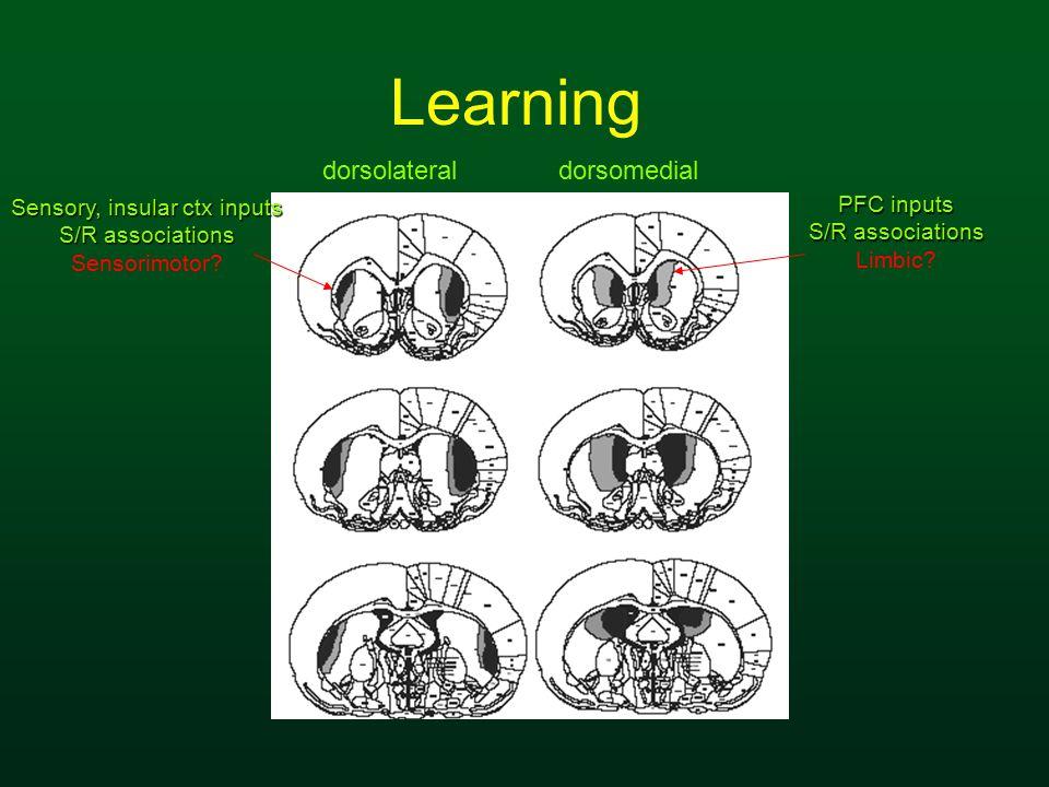 Sensory, insular ctx inputs S/R associations Sensorimotor? dorsolateraldorsomedial PFC inputs S/R associations Limbic? Learning