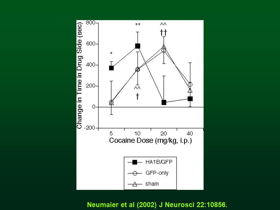Neumaier et al (2002) J Neurosci 22:10856.