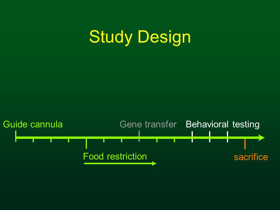 Study Design Guide cannula Food restriction Behavioral testingGene transfer sacrifice