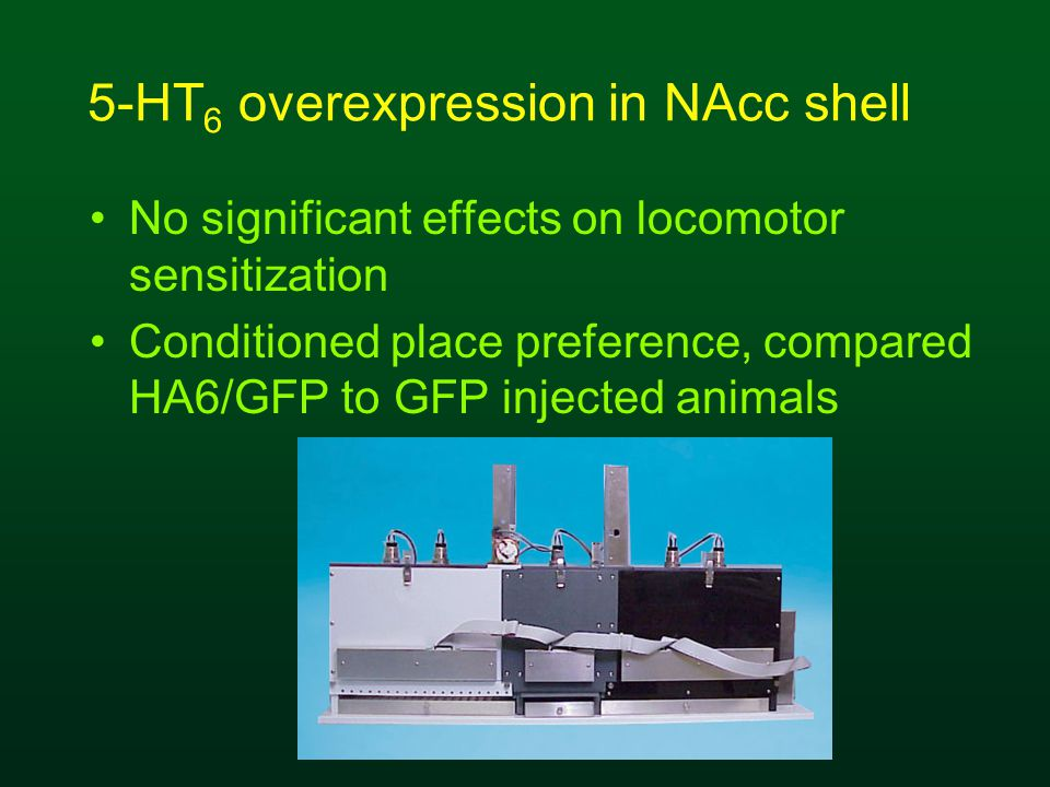 5-HT 6 overexpression in NAcc shell No significant effects on locomotor sensitization Conditioned place preference, compared HA6/GFP to GFP injected animals