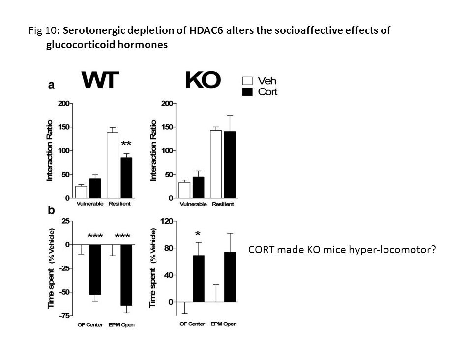 Fig 10: Serotonergic depletion of HDAC6 alters the socioaffective effects of glucocorticoid hormones CORT made KO mice hyper-locomotor?