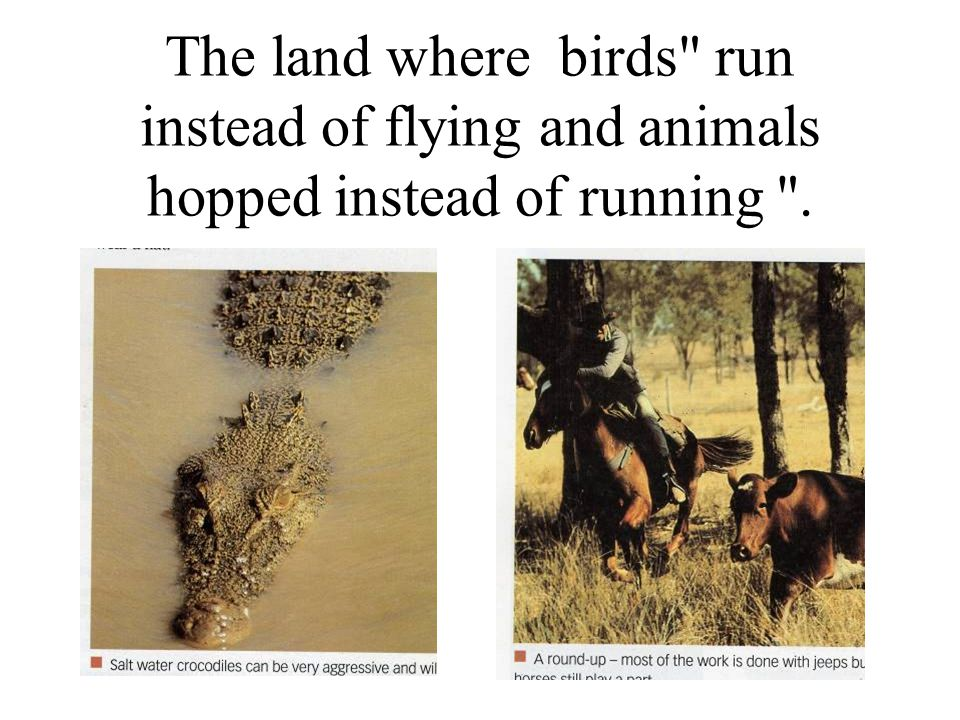 The land where birds run instead of flying and animals hopped instead of running .