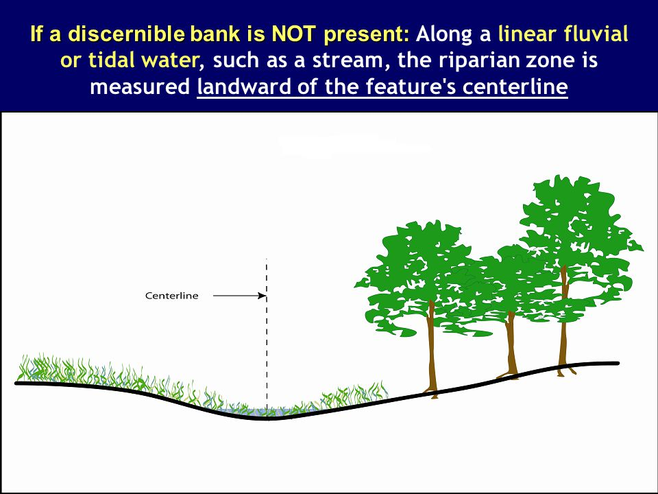 If a discernible bank is NOT present: If a discernible bank is NOT present: Along a linear fluvial or tidal water, such as a stream, the riparian zone