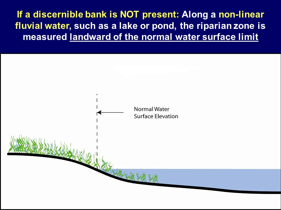 If a discernible bank is NOT present: If a discernible bank is NOT present: Along a non-linear fluvial water, such as a lake or pond, the riparian zon