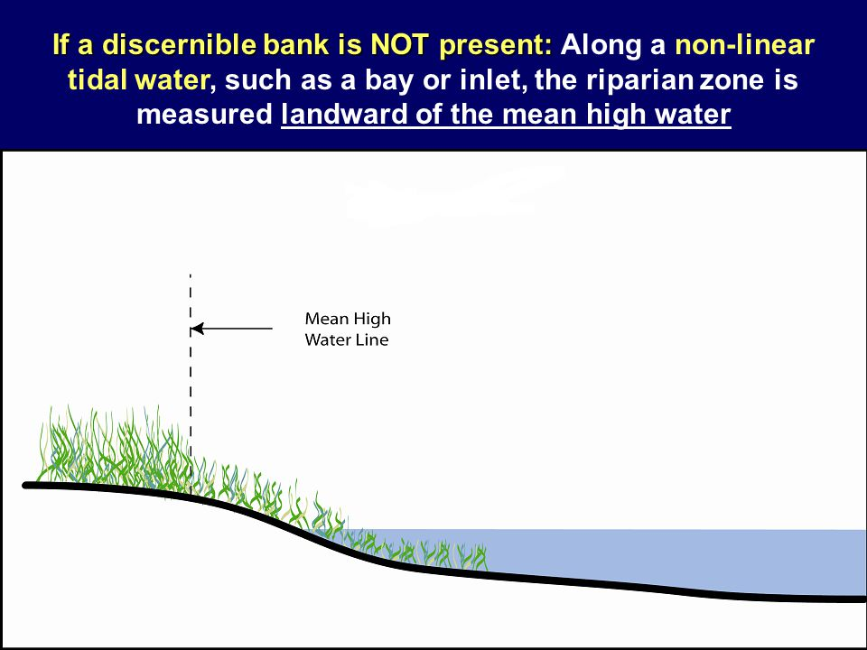 If a discernible bank is NOT present: If a discernible bank is NOT present: Along a non-linear tidal water, such as a bay or inlet, the riparian zone
