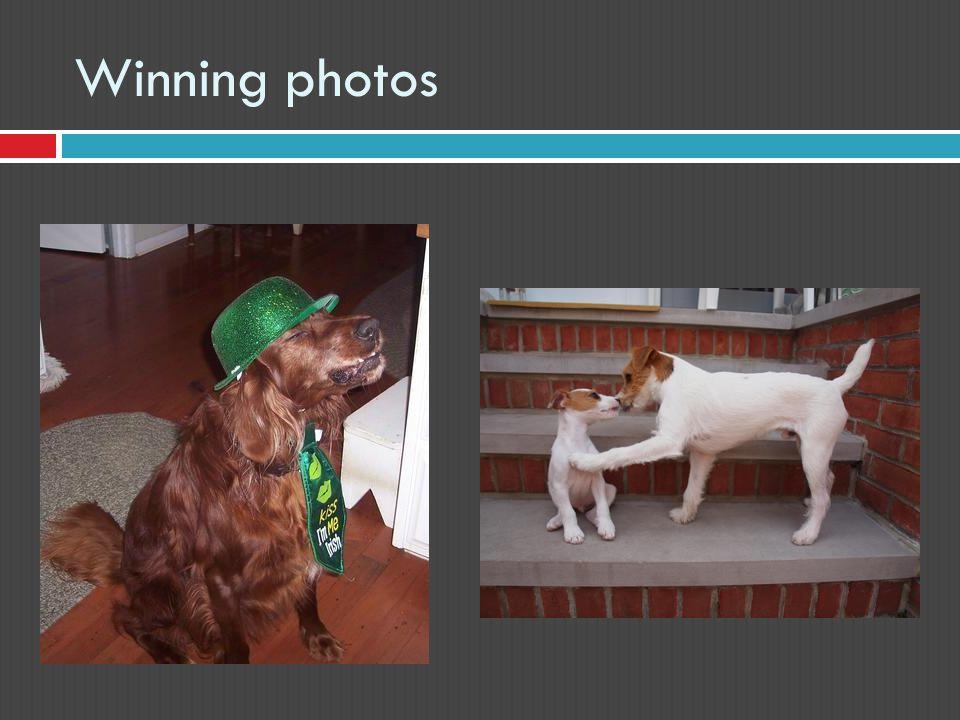 Winning photos