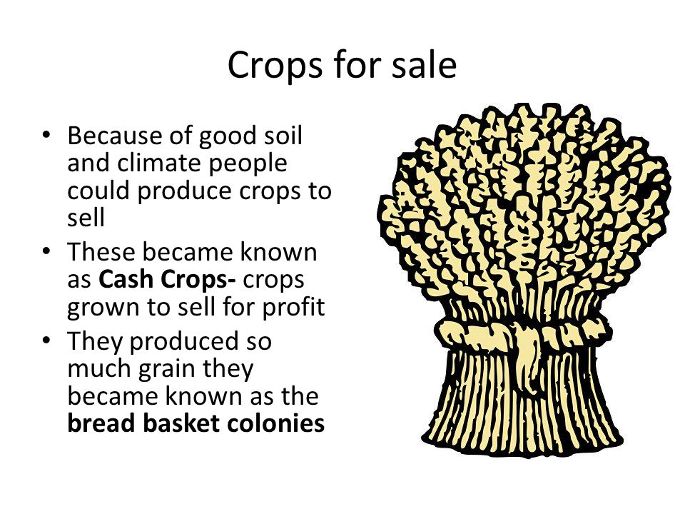 Crops for sale Because of good soil and climate people could produce crops to sell These became known as Cash Crops- crops grown to sell for profit They produced so much grain they became known as the bread basket colonies