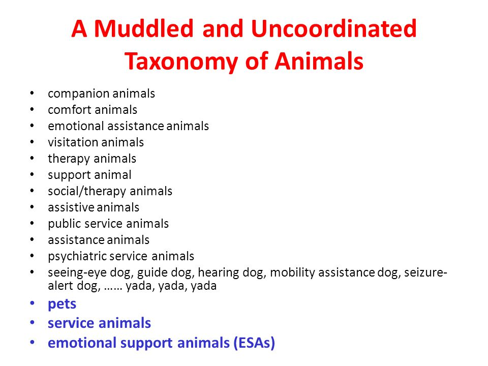A Muddled and Uncoordinated Taxonomy of Animals companion animals comfort animals emotional assistance animals visitation animals therapy animals support animal social/therapy animals assistive animals public service animals assistance animals psychiatric service animals seeing-eye dog, guide dog, hearing dog, mobility assistance dog, seizure- alert dog, …… yada, yada, yada pets service animals emotional support animals (ESAs)