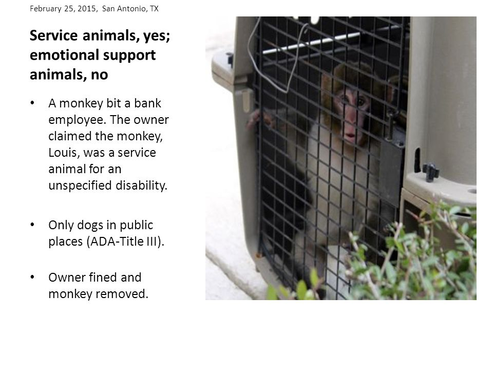 February 25, 2015, San Antonio, TX Service animals, yes; emotional support animals, no A monkey bit a bank employee.