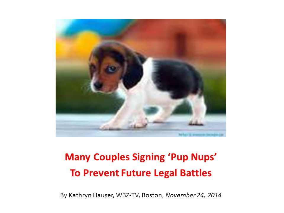 Many Couples Signing 'Pup Nups' To Prevent Future Legal Battles By Kathryn Hauser, WBZ-TV, Boston, November 24, 2014