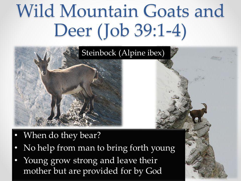 Wild Donkey (Job 39:5-8) Who sets free.