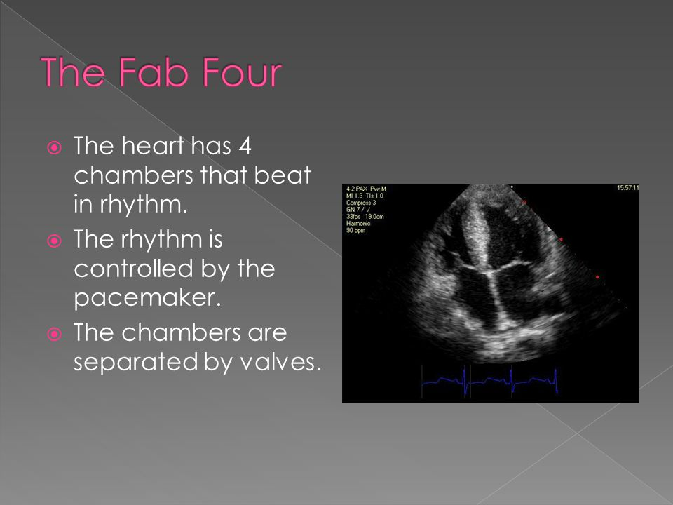  The heart has 4 chambers that beat in rhythm.  The rhythm is controlled by the pacemaker.