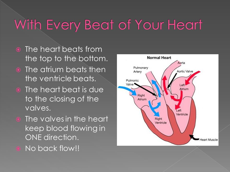  The heart beats from the top to the bottom.  The atrium beats then the ventricle beats.