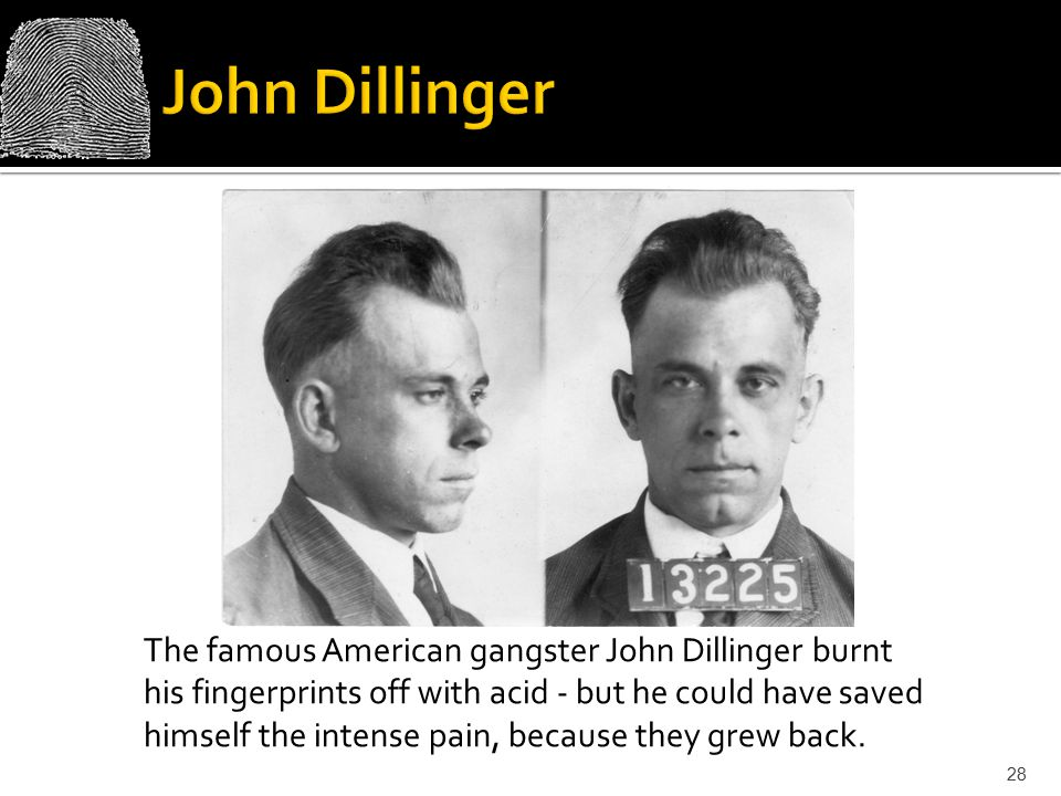 The famous American gangster John Dillinger burnt his fingerprints off with acid - but he could have saved himself the intense pain, because they grew back.