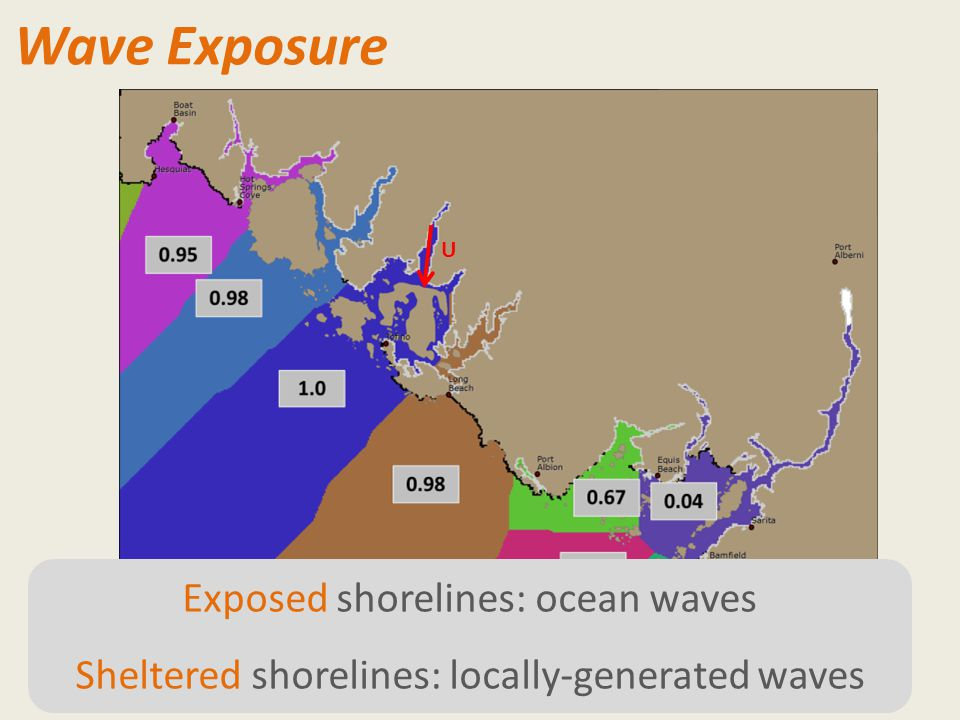 Wave Exposure Exposed shorelines: ocean waves Sheltered shorelines: locally-generated waves U