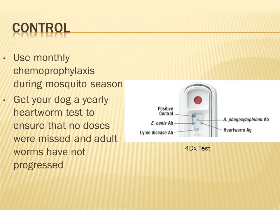 Use monthly chemoprophylaxis during mosquito season Get your dog a yearly heartworm test to ensure that no doses were missed and adult worms have not