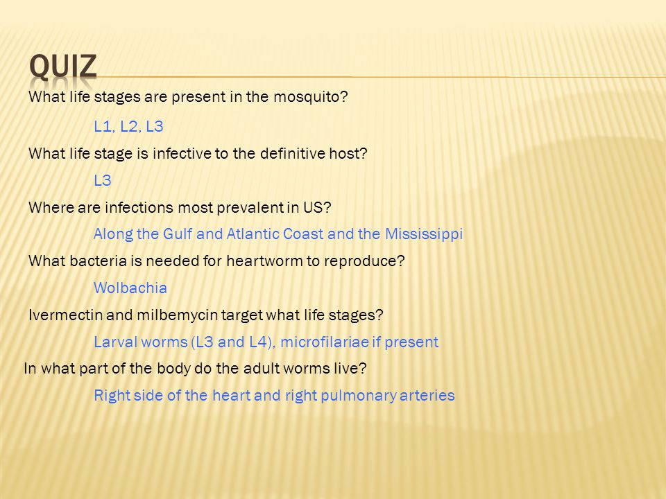 What life stages are present in the mosquito.