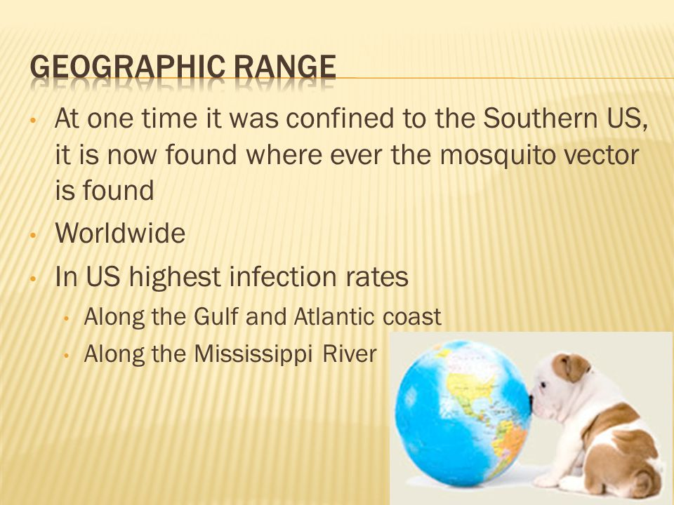 At one time it was confined to the Southern US, it is now found where ever the mosquito vector is found Worldwide In US highest infection rates Along