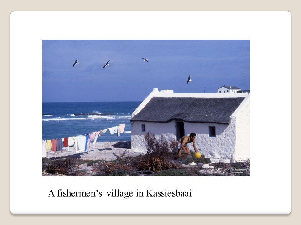 A fishermen's village in Kassiesbaai