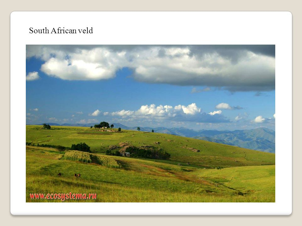 South African veld